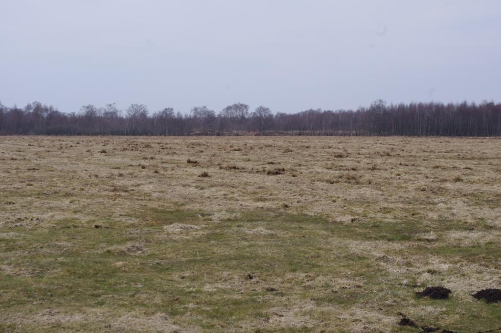 Lohner Moor (CC awesomatik.com)