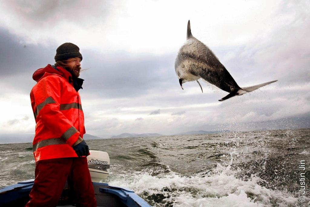 Fungi the Dingle Dolphin in Ireland