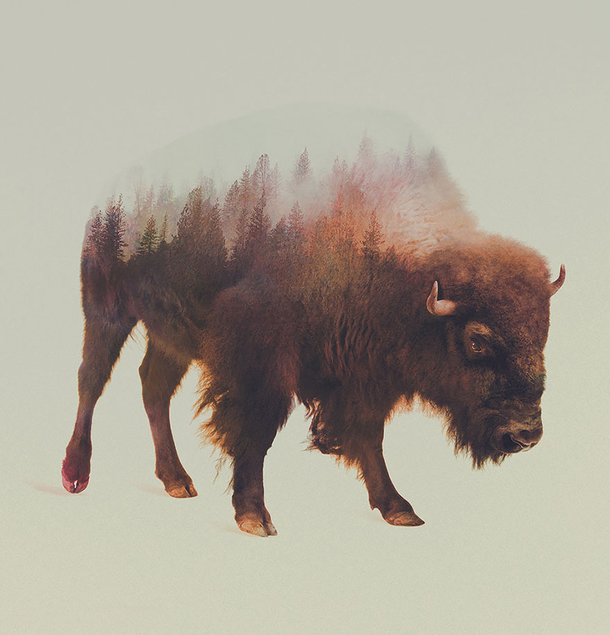 animals_landscapes_doubleexposure_11