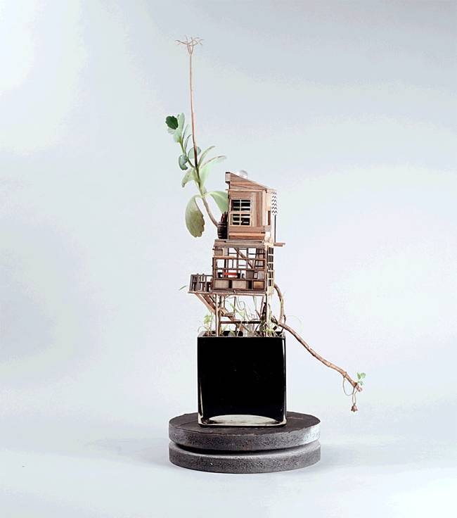 houseplant-treehouses-jedediah-corwyn-voltz-1.jpg.650x0_q70_crop-smart