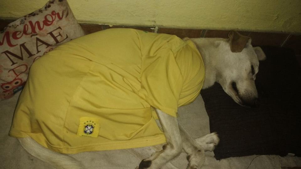 Heinze Sánchez new buddy enzo sleeping peacefully