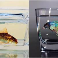Life-Like Fish Paintings Earn this South Korean Artist International Fame