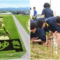 Japanese Volunteers Create Gigantic Art with Rice Saplings in Village Paddy Fields