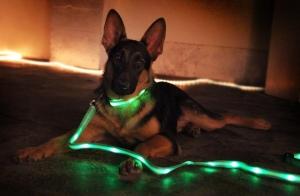 LED-Light-Up-Dog-Leash
