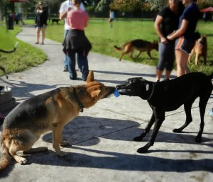 Ottawa Dog Training