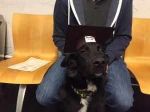 dog-training-ottawa