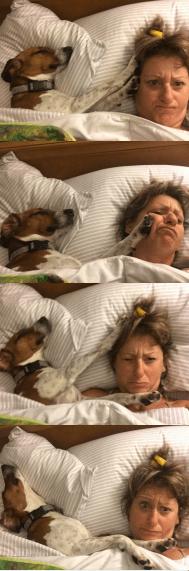 Entitlement-Dog Training Tips
