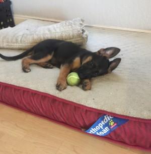 puppy training Ottawa