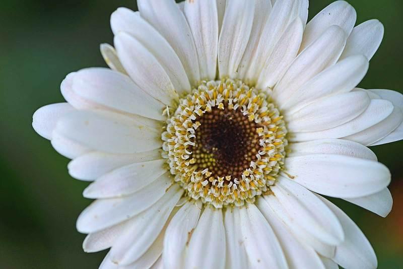 white-flower_9470