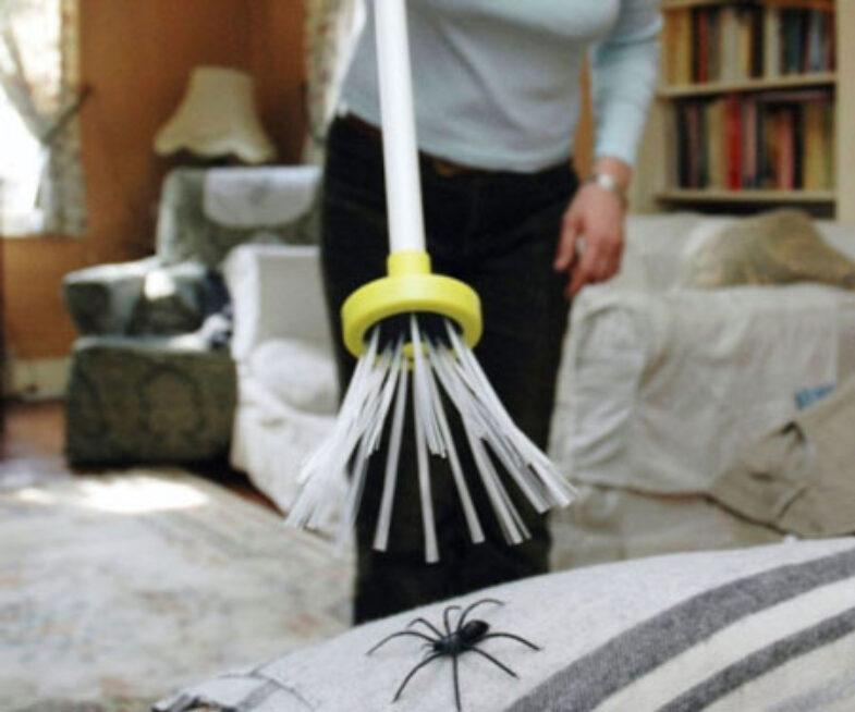 Harm-Free Spider Catcher