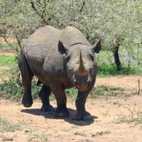 Spotting Rhino on Safari in South Africa