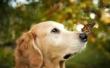Animals (7)