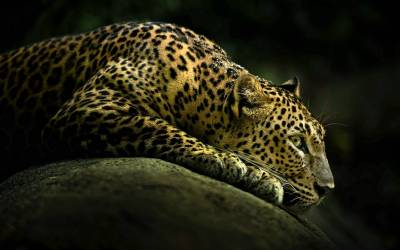 Animals Wallpaper Set 15 « Awesome Wallpapers