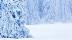 winter season_by_dan_dragos_1920x1080