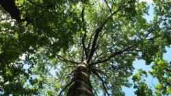 Магия деревьев. — Славянская культура