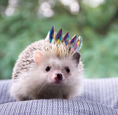 cute hedgehog mobile