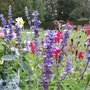 Flowers in the castle garden