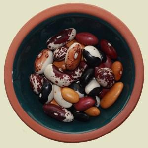 Drying (Shell) Beans