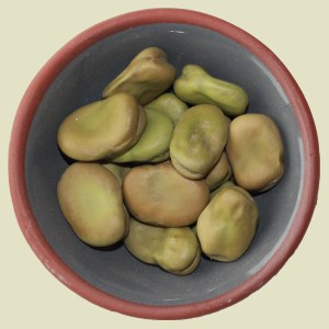Fava/Broad Beans