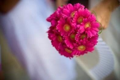 pink gerbs