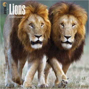 Lions_BrownTrout