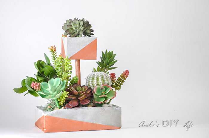Imaginative ways to plant succulents a wonderful thought imaginative ways to plant succulents succulents succulentplanters succulentdecor awonderfulthought fandeluxe Gallery