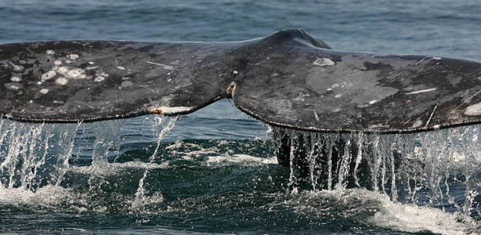 The Third Whale