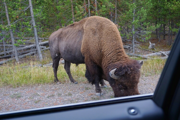 Yellowstone National Park Photo Diary 24