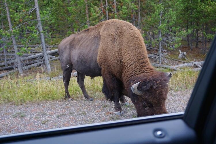 Yellowstone National Park Photo Diary 24