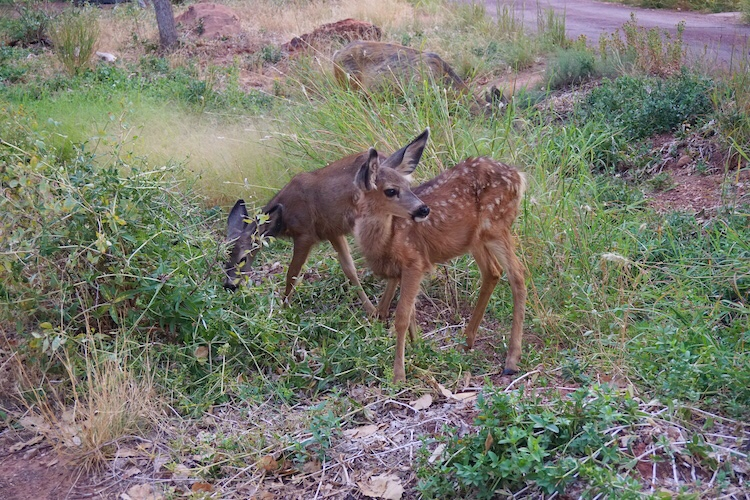 Zion National Park_Photo Diary 16