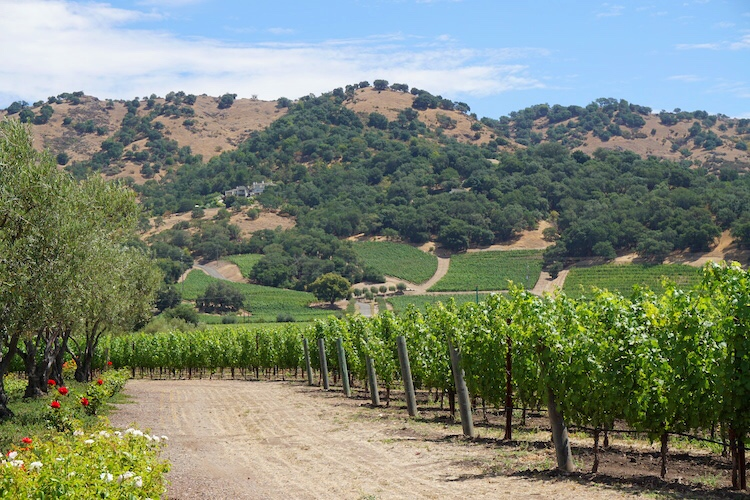Guide to Wine Tasting in Napa Valley Wine Country