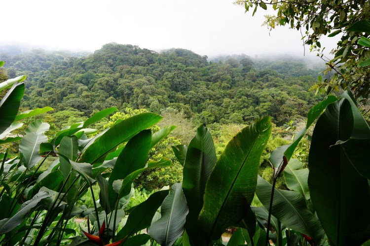 Exploring Costa Rica with Marbella Tours_7