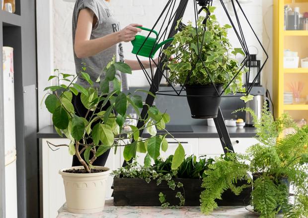 7 plantas de interiores que no mueren fácilmente