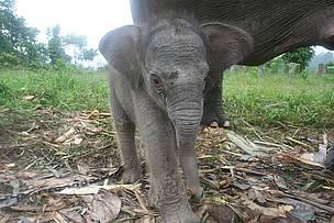 / ©: WWF Indonesia / Syamsuardi