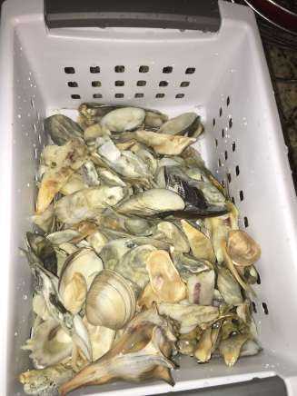how to clean oysters shells