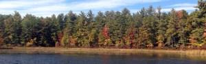 Autumn Tree lakeside