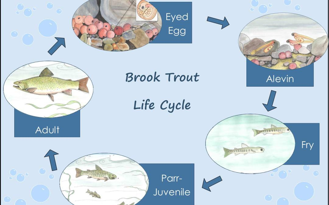 Tank Tales: Brook Trout Eggs Arrive in Wakefield!