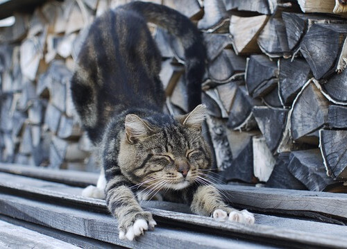 cat with firewood