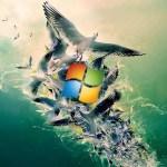 Windows 8, windows 8 wallpapers, Windows 8 stunning wallpapers, Windows 8 wallpapers, Download free Windows 8 wallpapers, Download Windows 8 wallpaper, (19)