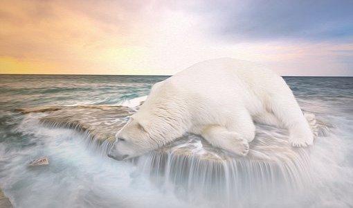 Eisbär des Südens – Warum gewisse Länder gerne den Klimawandel (Klimaschwandel) haben