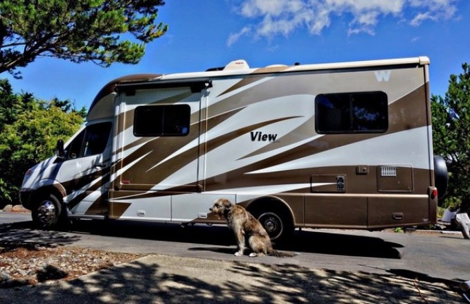 Winnebago Dog