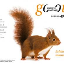 Eichhörnchen – Erfahrungen sammeln!