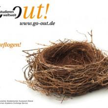 Nest – ausgeflogen!