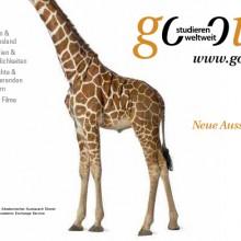 Giraffe – Neue Aussichten!