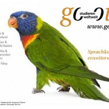Papagei – Sprachkompetenz erweitern!