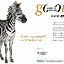 Zebra – Besser weit gestreift als kleinkariert!