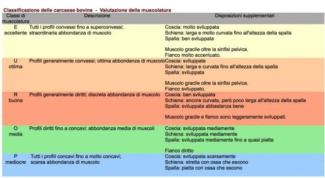 Vitellone classificazione muscolatura