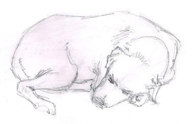 dog study 01