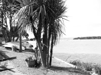 coast & cabbage trees