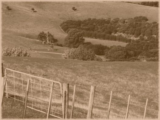sepia fields